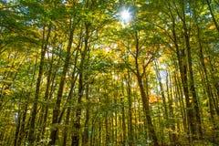 Bosque en la caída Imágenes de archivo libres de regalías