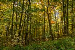 Bosque en la caída Foto de archivo