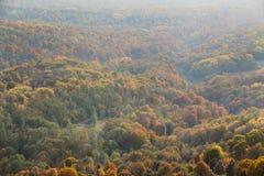bosque en la caída con neblina imagen de archivo