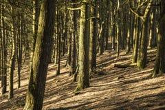 Bosque en la colina de Tandle, Royton Fotos de archivo libres de regalías