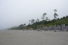 Bosque en la Costa del Pacífico en el camping de Kalaloch, Washington los E.E.U.U. Imagen de archivo libre de regalías