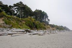 Bosque en la Costa del Pacífico en el camping de Kalaloch, Washington los E.E.U.U. Foto de archivo