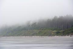 Bosque en la Costa del Pacífico en el camping de Kalaloch, Washington los E.E.U.U. Fotografía de archivo
