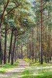Bosque en la isla de Usedom Foto de archivo