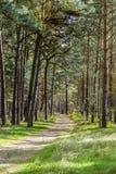 Bosque en la isla de Usedom Fotografía de archivo libre de regalías