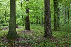 Bosque en la mañana de la primavera Fotos de archivo libres de regalías