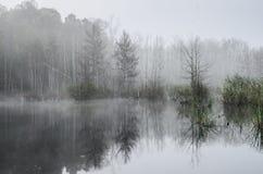 Bosque en la mañana de niebla Fotos de archivo libres de regalías