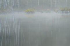 Bosque en la mañana de niebla Imagen de archivo