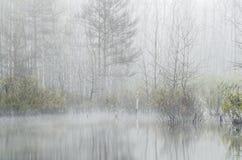 Bosque en la mañana de niebla Imágenes de archivo libres de regalías