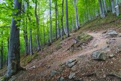 Bosque en la monta?a balc?nica, Bulgaria fotografía de archivo libre de regalías