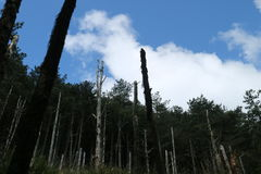 Bosque en la montaña de Taiwán Nanhu Fotografía de archivo libre de regalías