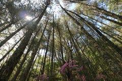 Bosque en la montaña de Taiwán Nanhu Imágenes de archivo libres de regalías