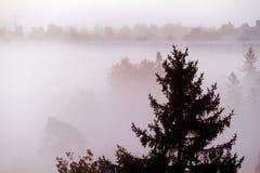 Bosque en la niebla Fotografía de archivo libre de regalías