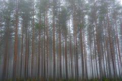 Bosque en la niebla de la mañana Fotos de archivo