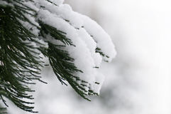 Bosque en la nieve Fotografía de archivo libre de regalías