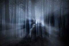 Bosque en la noche fotos de archivo