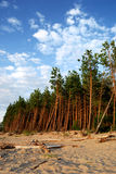 Bosque en la orilla de mar imagen de archivo libre de regalías