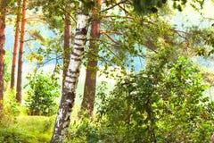 Bosque en la orilla del lago Imagen de archivo