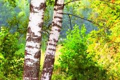 Bosque en la orilla del lago Foto de archivo
