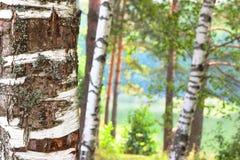 Bosque en la orilla del lago Fotografía de archivo libre de regalías