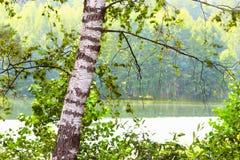 Bosque en la orilla del lago Fotos de archivo