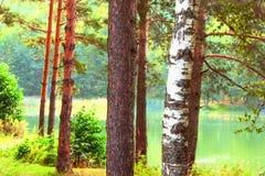 Bosque en la orilla del lago Fotos de archivo libres de regalías