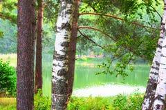 Bosque en la orilla del lago Foto de archivo libre de regalías