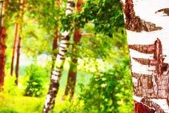 Bosque en la orilla del lago Imagenes de archivo