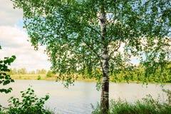 Bosque en la orilla del lago Fotografía de archivo