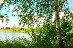 Bosque en la orilla del lago Imagen de archivo libre de regalías