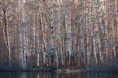 Bosque en la orilla del lago en la primavera Imagen de archivo libre de regalías