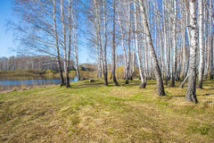 Bosque en la orilla del lago en primavera Fotografía de archivo libre de regalías