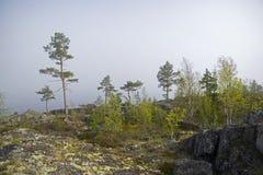 Bosque en la orilla del lago Ladoga Karelia, Rusia Imagenes de archivo