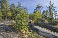 Bosque en la orilla rocosa del lago Ladoga Imagen de archivo
