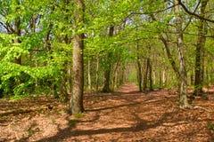 Bosque en la primavera fotos de archivo libres de regalías