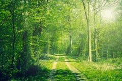 Bosque en la primavera imagen de archivo libre de regalías