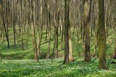 Bosque en la primavera Foto de archivo libre de regalías