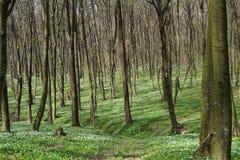 Bosque en la primavera Fotografía de archivo libre de regalías