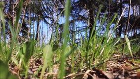 Bosque en la primavera almacen de video