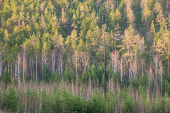 Bosque en la primavera temprana Imagen de archivo libre de regalías