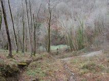 Bosque en la primavera temprana, pendiente al lago Fotos de archivo