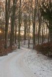 Bosque en la puesta del sol Imágenes de archivo libres de regalías
