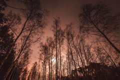 Bosque en la puesta del sol Imagen de archivo