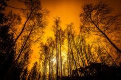 Bosque en la puesta del sol Fotos de archivo
