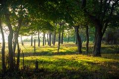 Bosque en la salida del sol Fotos de archivo libres de regalías