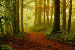 Bosque en la salida del sol en el otoño Imagenes de archivo