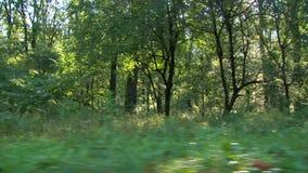Bosque en la salida del sol - tiro del steadicam almacen de video