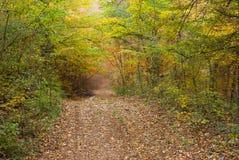 Bosque en la temporada de otoño Imágenes de archivo libres de regalías
