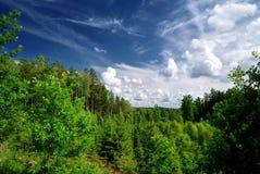 Bosque en las colinas en Latvia imágenes de archivo libres de regalías