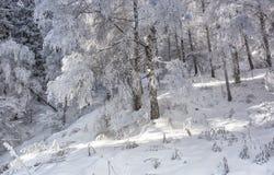 Bosque en las montañas Fotos de archivo
